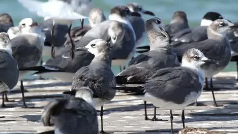 Largartos-Birds-17