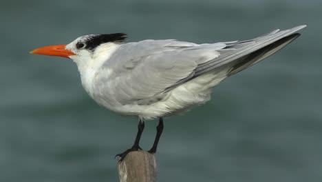 Largartos-Birds-37