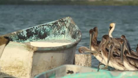 Largartos-Pelicans-00