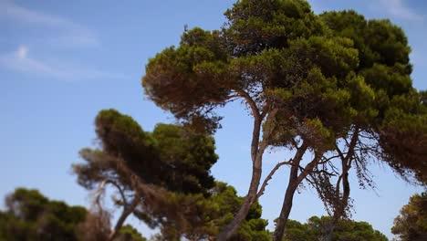 Mallorca-Bosque-00