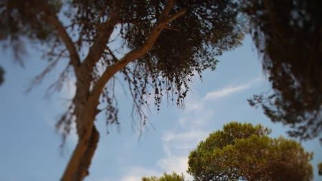 Mallorca-Bosque-03