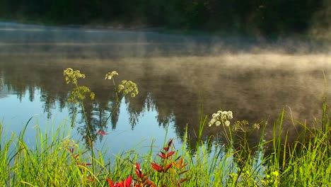 Steam-rises-from-Trillium-Lake-behind-grass-and-plants-near-Mt-Hood-in-Oregon