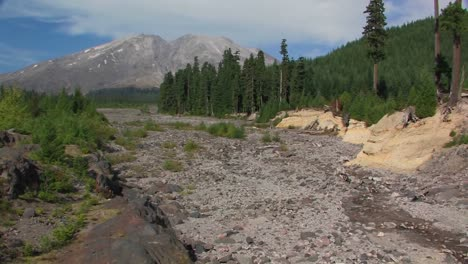 A-dry-riverbed-cuts-through-a-pine-forest-at-Mt-St-Helens-National-Park