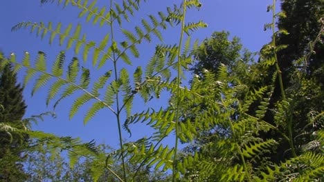Fern-branches-at-day