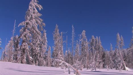 A-snowscape-with-winter-trees-covered-in-snow