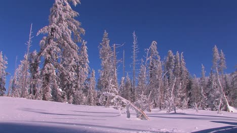 Pan-across-a-snowscape-with-winter-trees-covered-in-snow