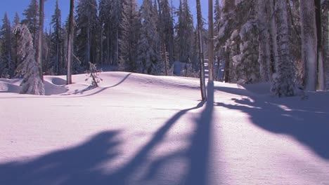 Tilt-up-from-a-tree-casting-a-shadow-into-the-sun