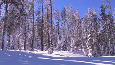 Pan-across-a-beautiful-snowscape-in-winter