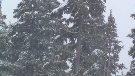 Heavy-snow-falls-in-a-forest