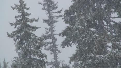 Heavy-snow-falls-in-a-forest-2