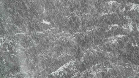 Heavy-snow-falls-in-a-forest-3