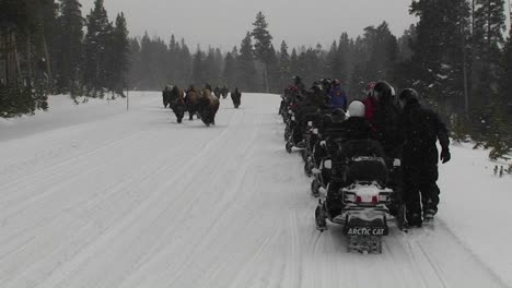 Snowmobiles-park-along-a-road-in-Yellowstone-National-Park-to-observe-buffalo-grazing