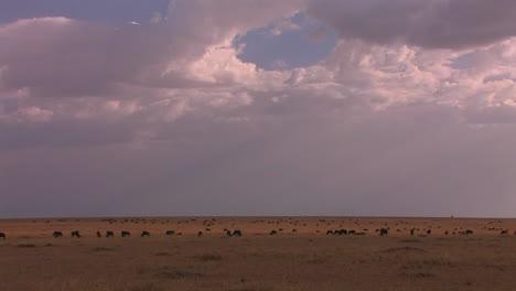 Eine-Herde-Von-Tieren-Besetzt-Eine-Weite-Grasebene