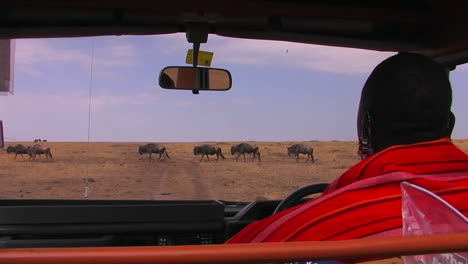 A-Masai-tribesman-waits-in-a-vehicle-for-wildebeest-to-cross-the-road