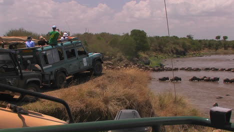 Tourists-watch-as-a-herd-of-wildebeest-cross-a-río