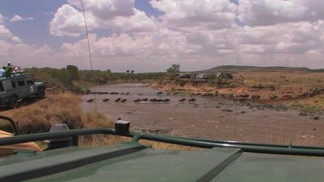 La-Gente-En-El-Safari-Mira-ñus-Cruzar-Un-Río