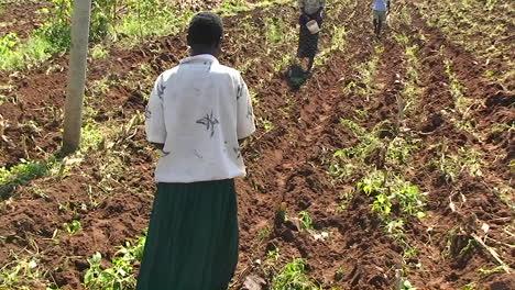 Eine-Gruppe-Von-Menschen-Pflanzt-Samen-Auf-Einem-Feld