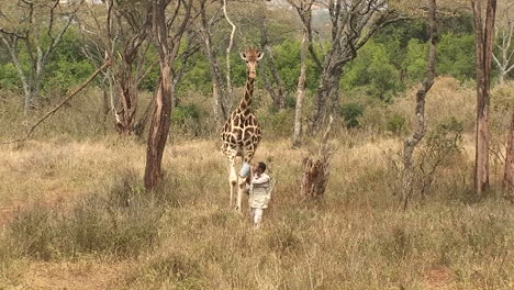 A-man-carrying-a-bucket-and-a-giraffe-walk-together-in-the-jungle