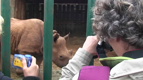 Two-women-take-pictures-of-a-rhinoceros-walking-around-in-a-cage