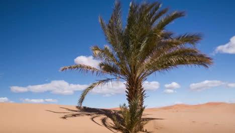 Merzouga-Palm-Shaky-00