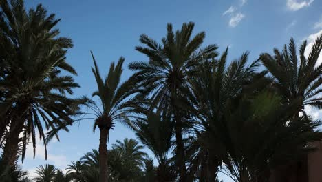 Oasis-Palm-Trees-01