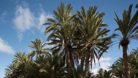 Oasis-Palm-Trees-02