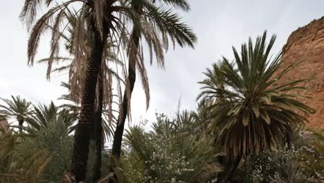 Oasis-Palms-04
