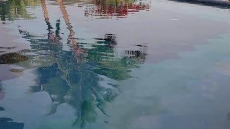 Palm-Reflection-00