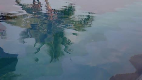 Palm-Reflection-01
