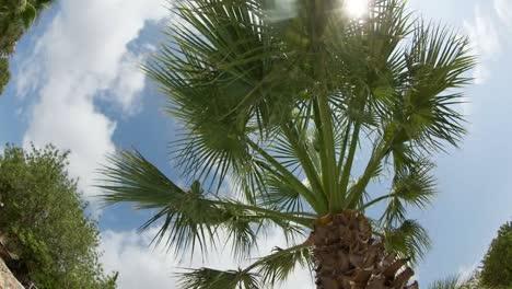 Palm-Tree-Fisheye-01