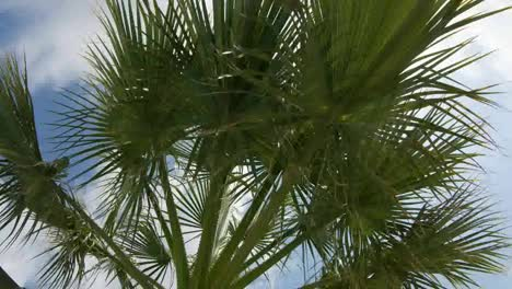Palm-Tree-Sky-01