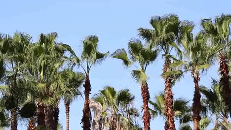 Palms-Blowing-00