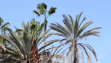 Palms-Blowing-01