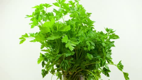 Parsley-00