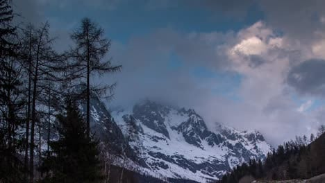 Pines-Alps-Mountains-00