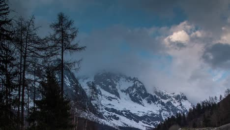 Pines-Alps-Mountains-01