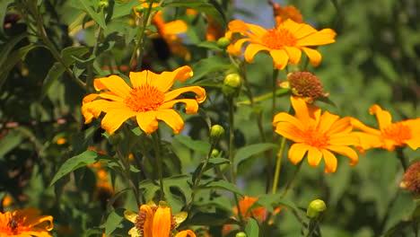 Plantas-Cubiertas-De-Flores-Anaranjadas-Se-Mecen-Con-La-Brisa