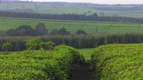 Rows-of-vegetation-grow-on-a-farm