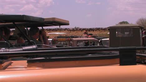 People-in-vehicles-observe-a-herd-of-animals-on-the-plains