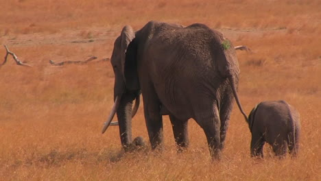 Mother-and-baby-elephant-in-savanna-in-Africa