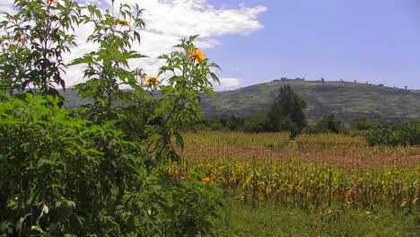 La-Vegetación-De-Un-Campo-Se-Mueve-Con-Una-Ligera-Brisa-