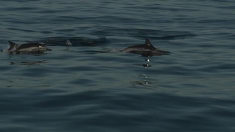 Los-Delfines-Juegan-En-El-Agua-Junto-A-Un-Barco-