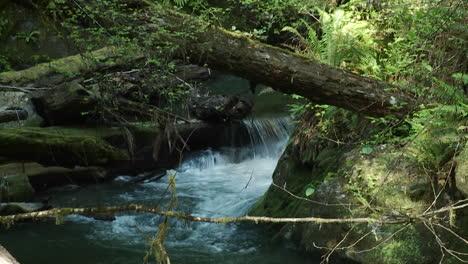 Un-Bonito-Arroyo-Fluye-A-Través-De-Una-Selva-Tropical