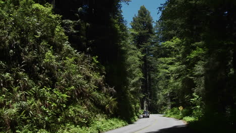Cars-drive-on-a-road-through-the-Redwood-forests-of-California