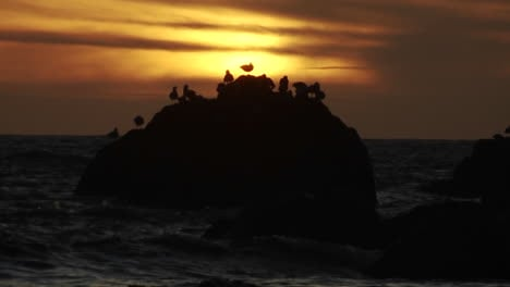 Seagulls-perch-on-a-rock-at-sunset-along-the-Oregon-coast
