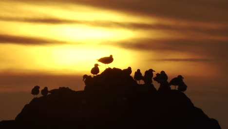 Seagulls-perch-on-a-rock-at-sunset-along-the-Oregon-coast-1