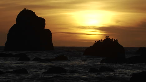 Seagulls-perch-on-a-rock-at-sunset-along-the-Oregon-coast-2