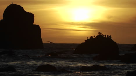 Seagulls-perch-on-a-rock-at-sunset-along-the-Oregon-coast-3