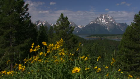 Springtime-and-flowers-with-the-Grand-Tetons-background