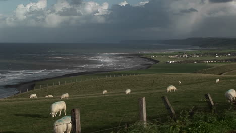 A-small-village-in-Ireland-with-the-coast-background-and-sheep-foreground